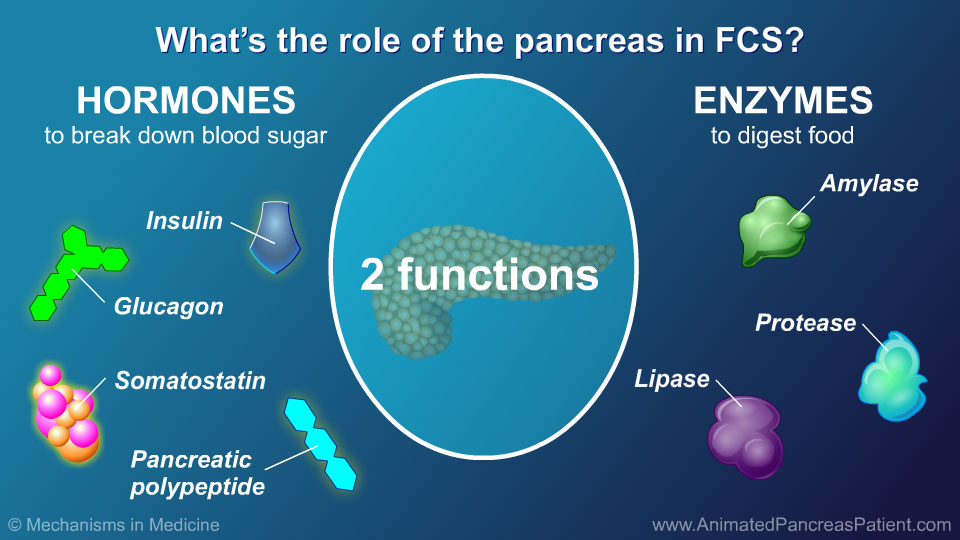 What's the role of the pancreas in FCS?